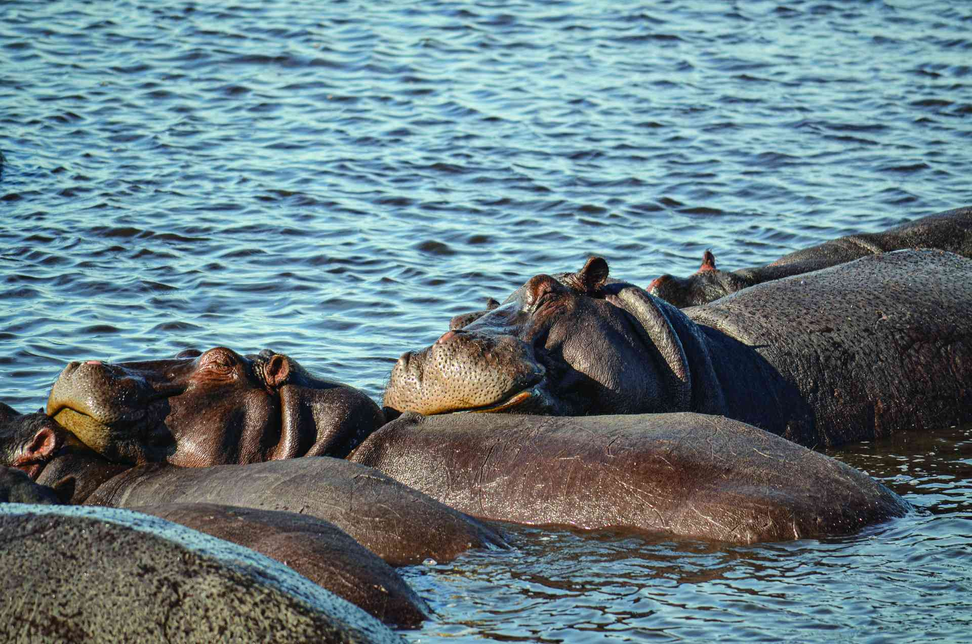 Chobe National Park, Botswana by Annelieke Huijgens