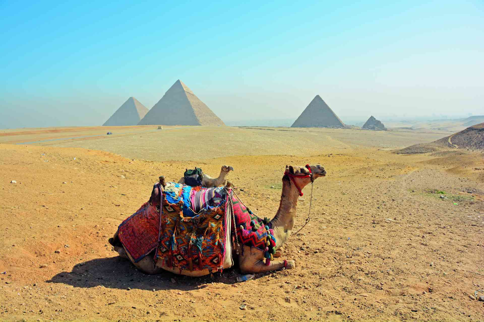 Camels in Cairo