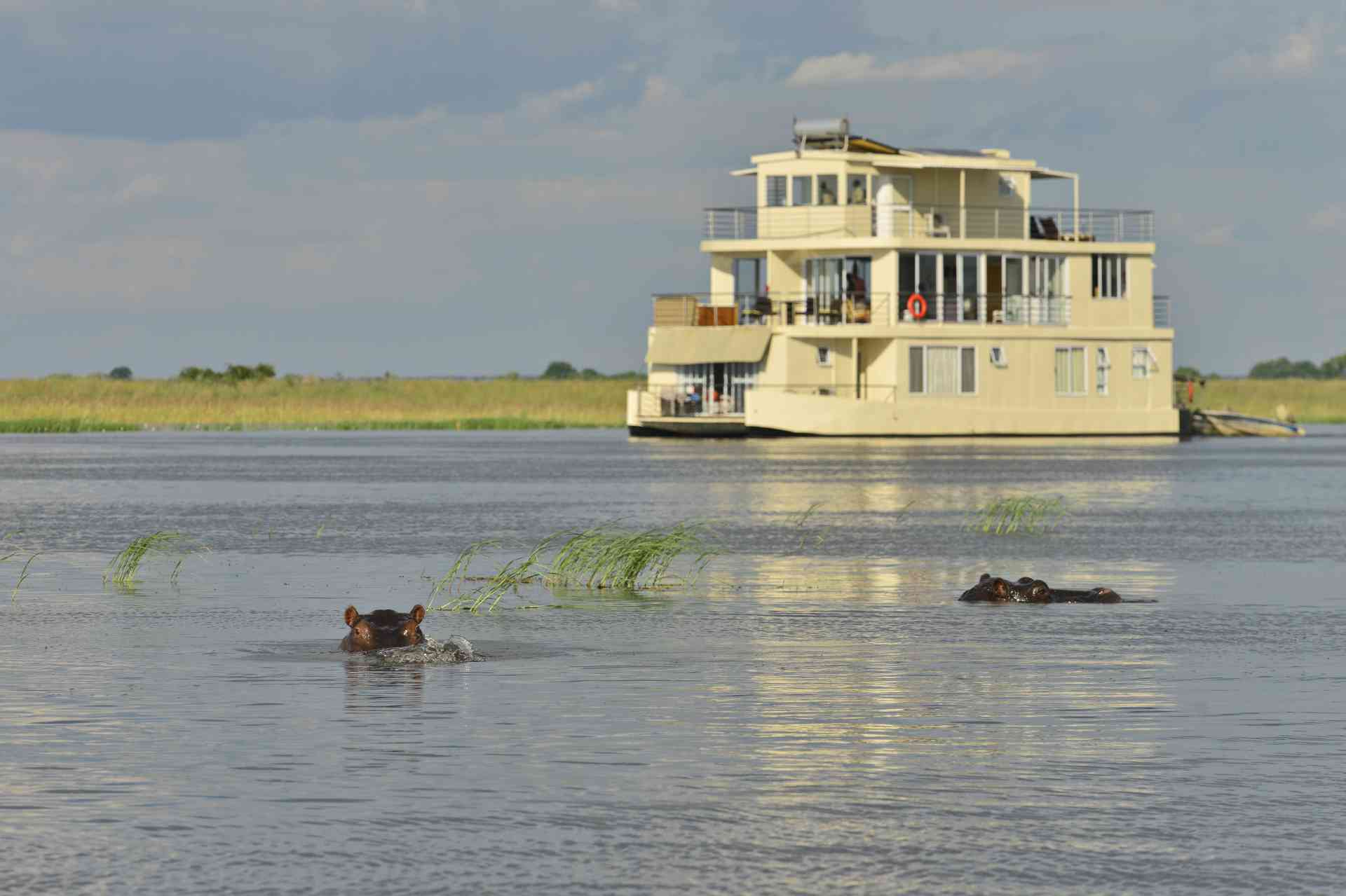 Hippos in front of Chobe Princess by ZQ Collection