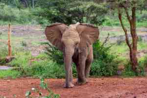 David Sheldrick Wildlife Trust by Chloe Marshman