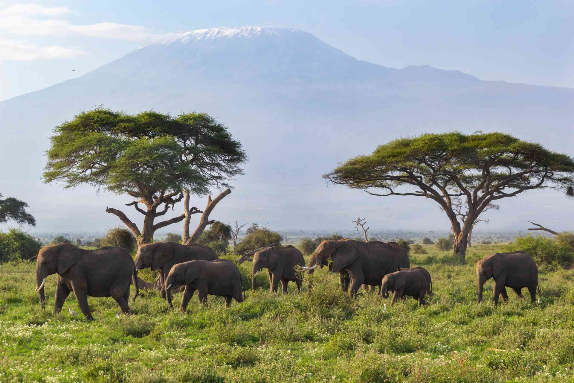 Mt Kilimanjaro and elephants, Amboseli National Park by Chloe Marshman