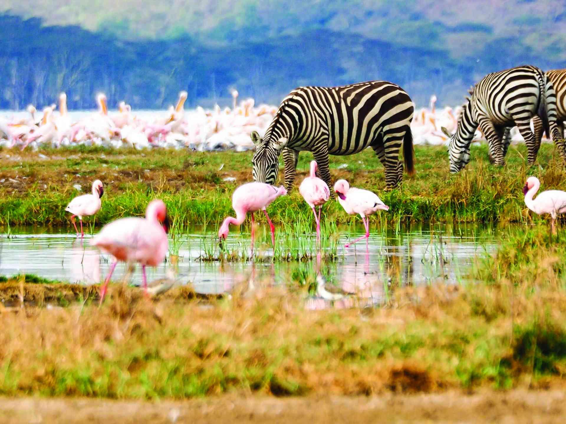 Wildlife, Lake Nakuru by Emily Fraser