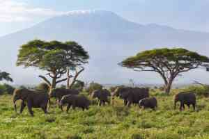 Amboseli National Park, Kenya by Chloe Marshman