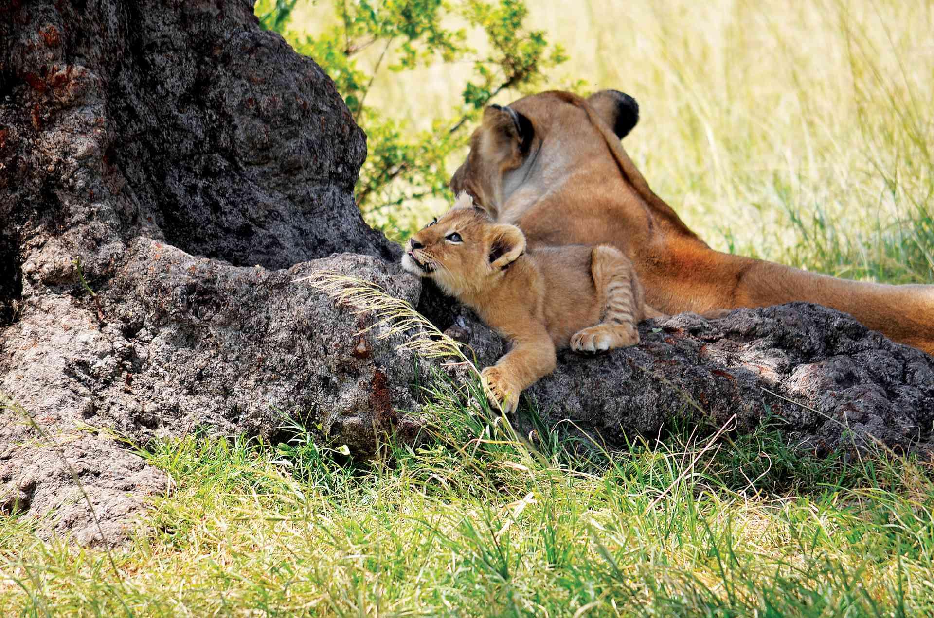 Maasai Mara, Kenya by Annelieke Huijgens