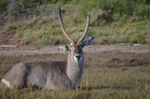 Sibuya Game Reserve, South Africa