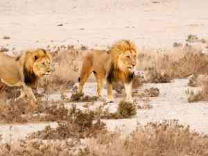 Etosha National Park by Emily Fraser