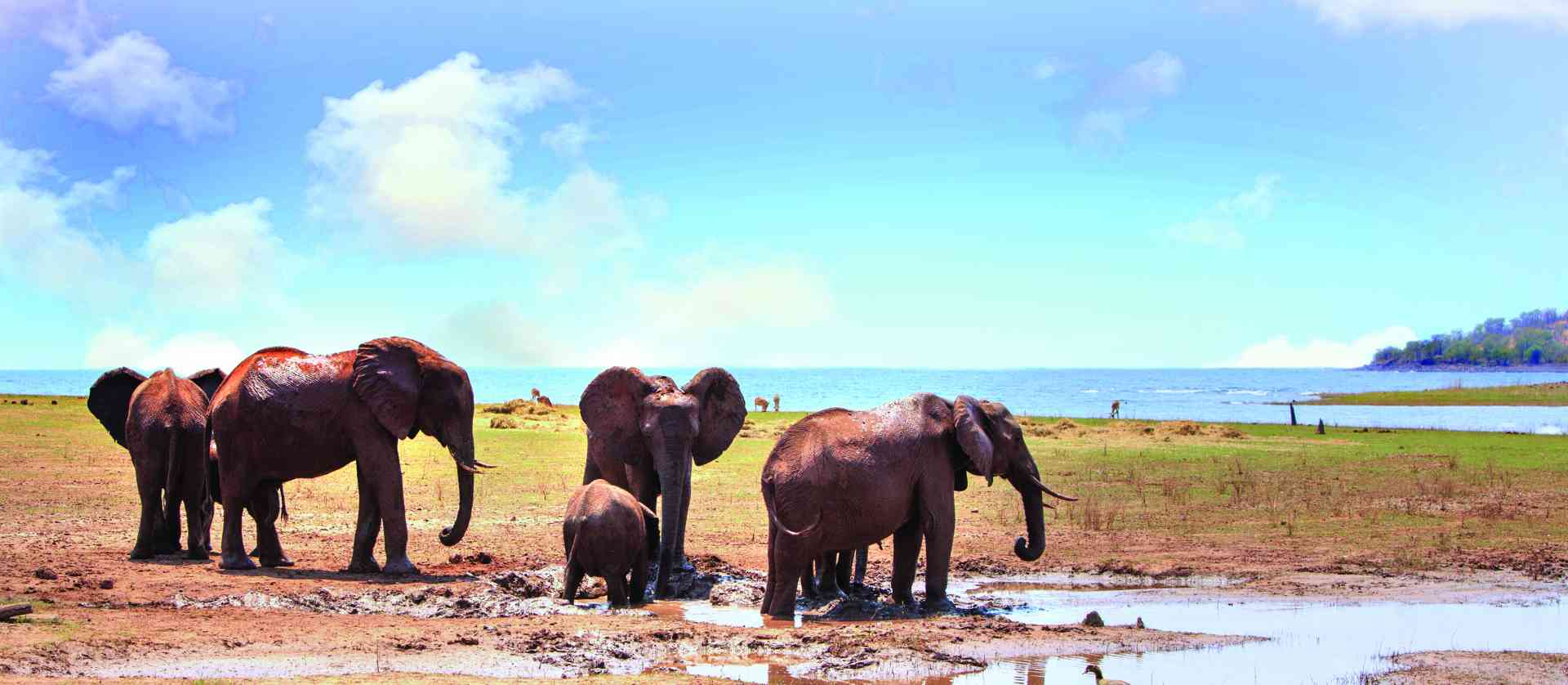 Elephants in Lake Kariba, Zimbabwe