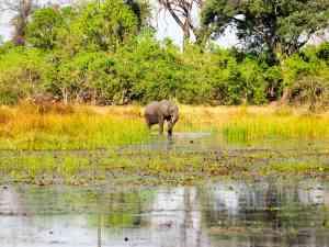 Okavango Delta, Botswana by Emily Fraser