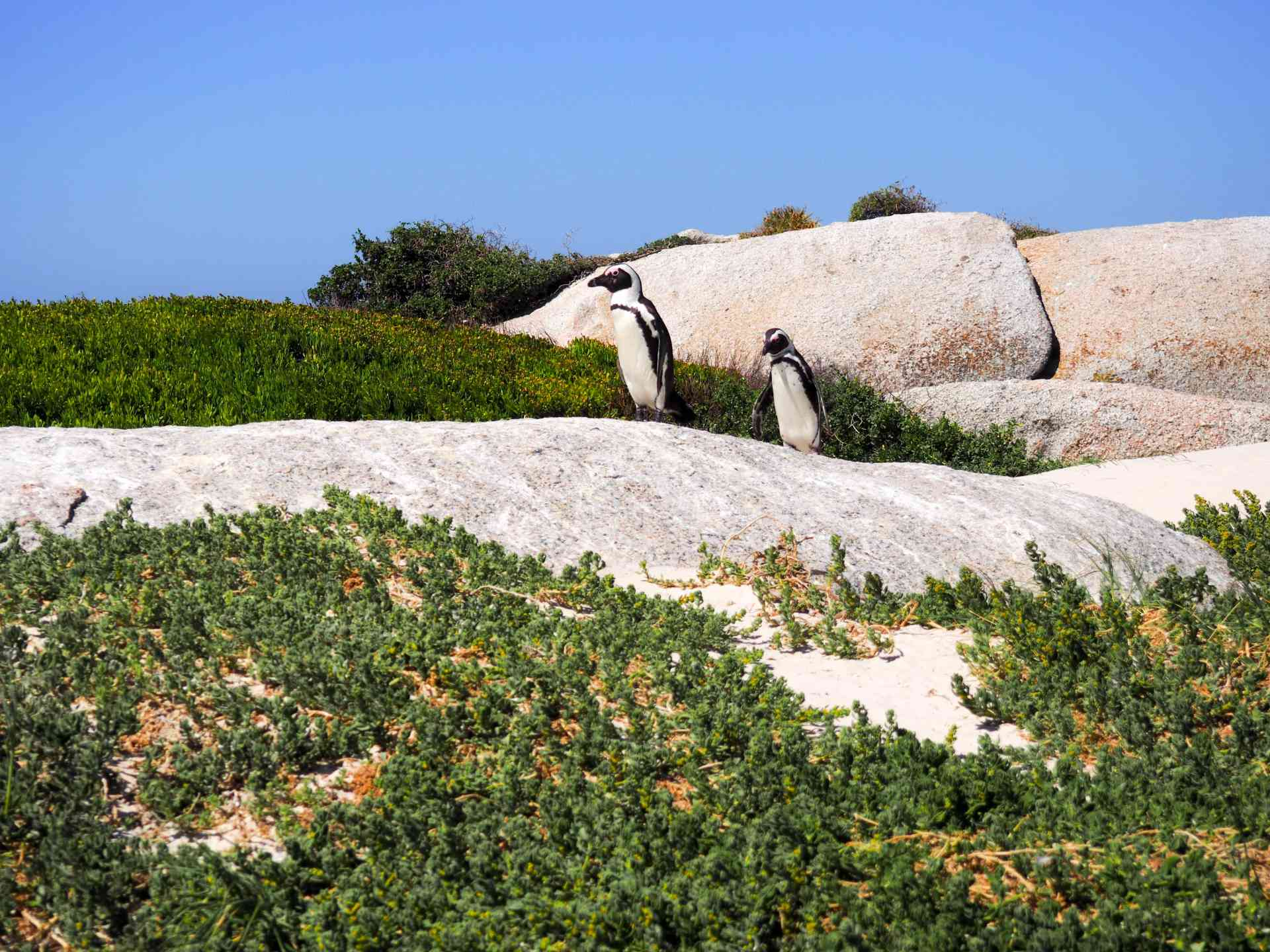Boulders Beach, Cape Town, South Africa by Emily Fraser