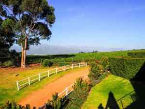 Stellenbosch, South Africa by Emily Fraser