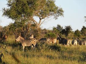 Kruger National Park, South Africa by Jeremy van Heerde