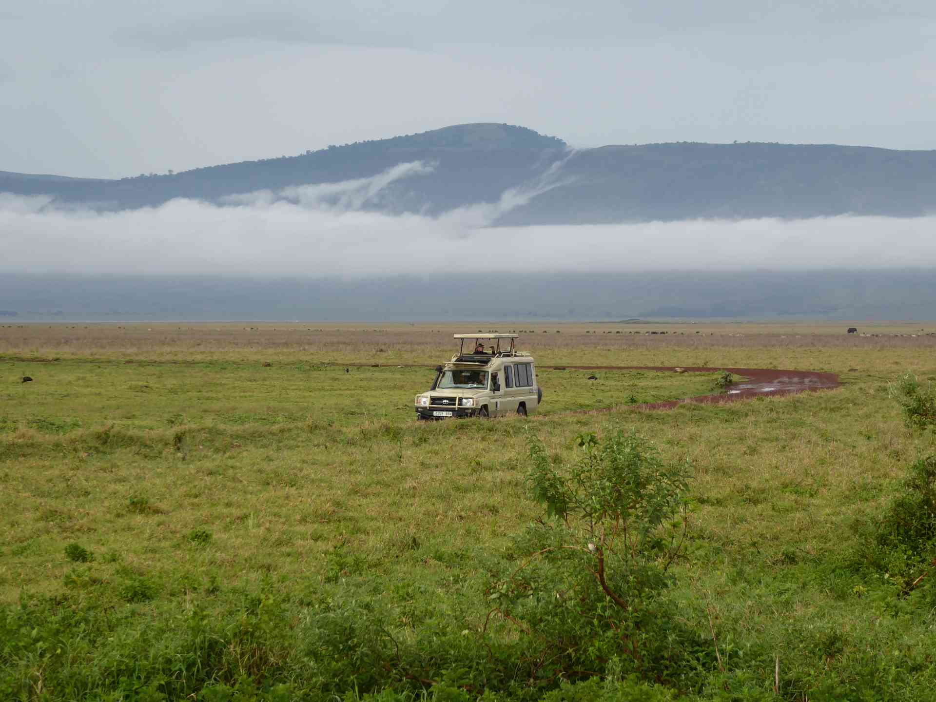 Safari in Ngorongoro Crater, Tanzania by Dennis Bunnik