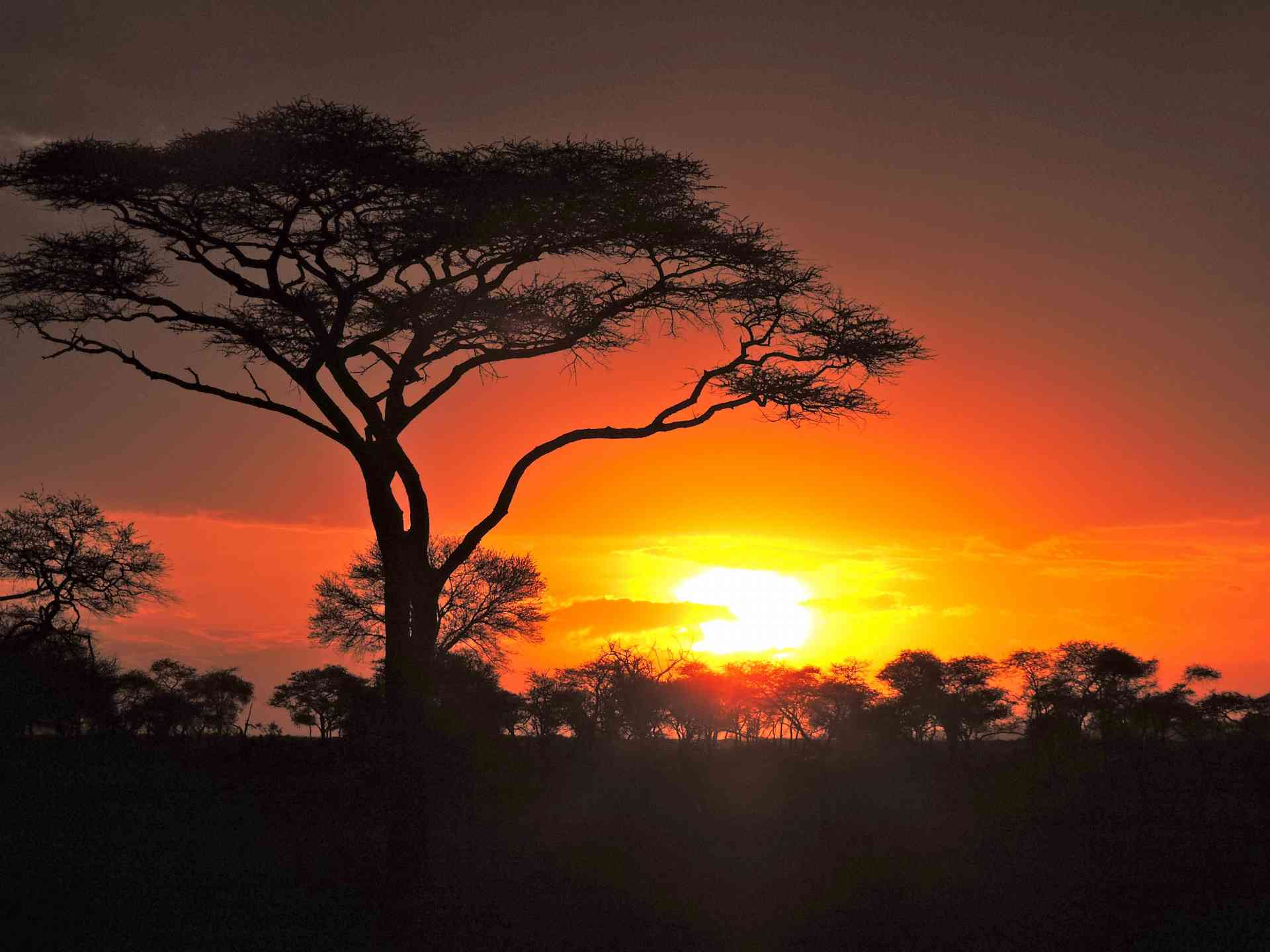 Sunset in Serengeti National Park, Tanzania by Zoe Francis
