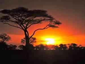 Sunset in Serengeti National Park, Tanzania by Zoe Francis