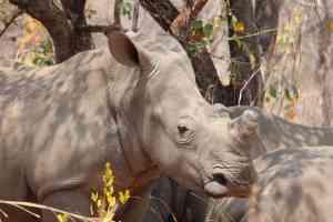 Mtobo National Park, Zimbabwe by Abbie Bell