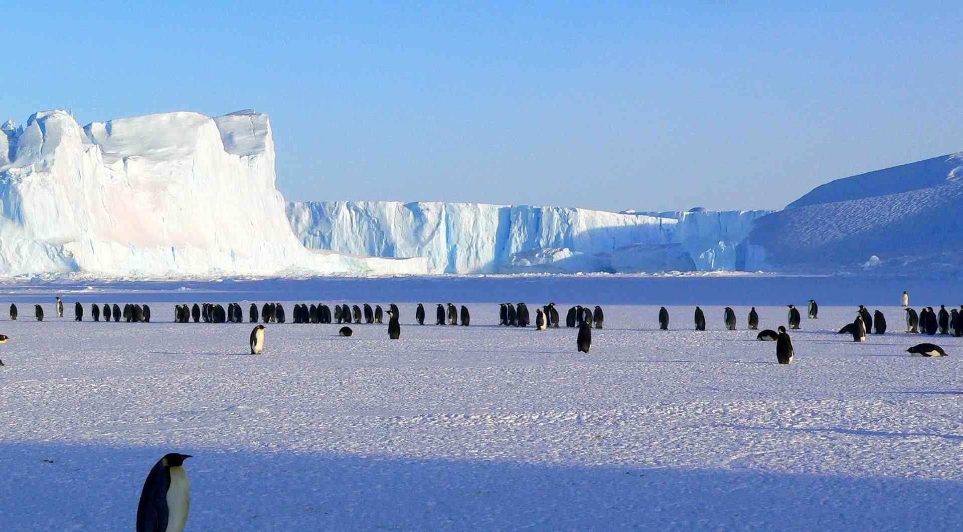 Emperor Penguins, Antarctica by Aurora Expeditions