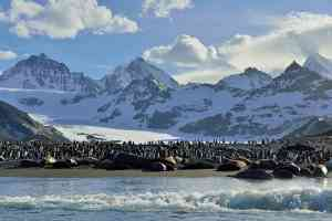 St Andrews Bay by Martin van Lokven - Oceanwide Expeditions