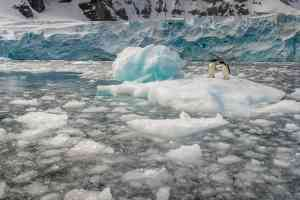 Adelie penguins, Antarctica by Aurora Expeditions