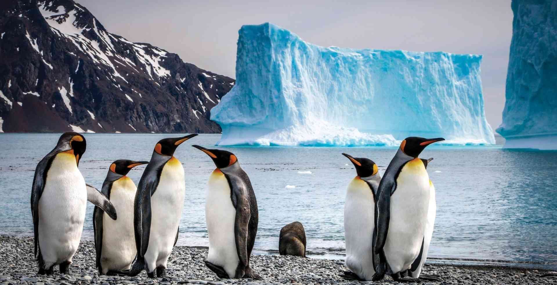 King penguins, Antarctica by Aurora Expeditions