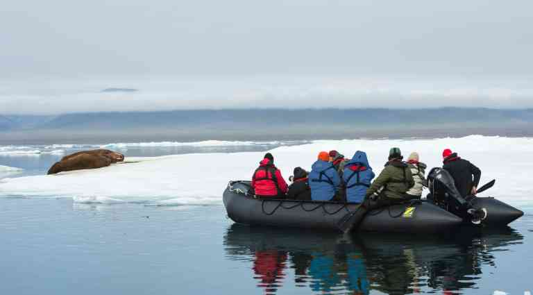 Zodiac observing a group of Walrus, Wrangel Island, Russia by Aurora Expeditions