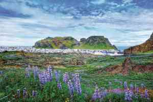 Westman Islands, Iceland by Aurora Expeditions