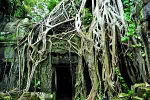 Angkor Wat, Cambodia by Priscilla Aster