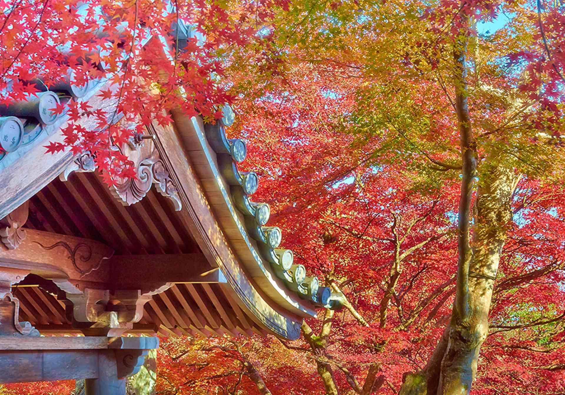 Autumn colours, Japan