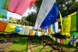 Lumbini by Priscilla Aster, Nepal