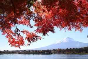 Mt Fuji & autumn leaves
