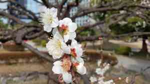 Blossoms in Tokyo, Japan by Dennis Bunnik