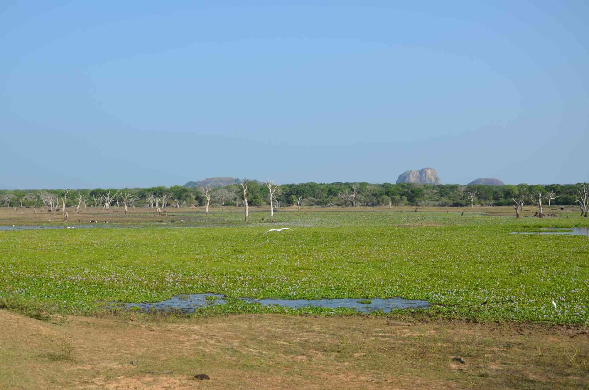 Yala National Park, Sri Lanka by Annelieke Huijgens