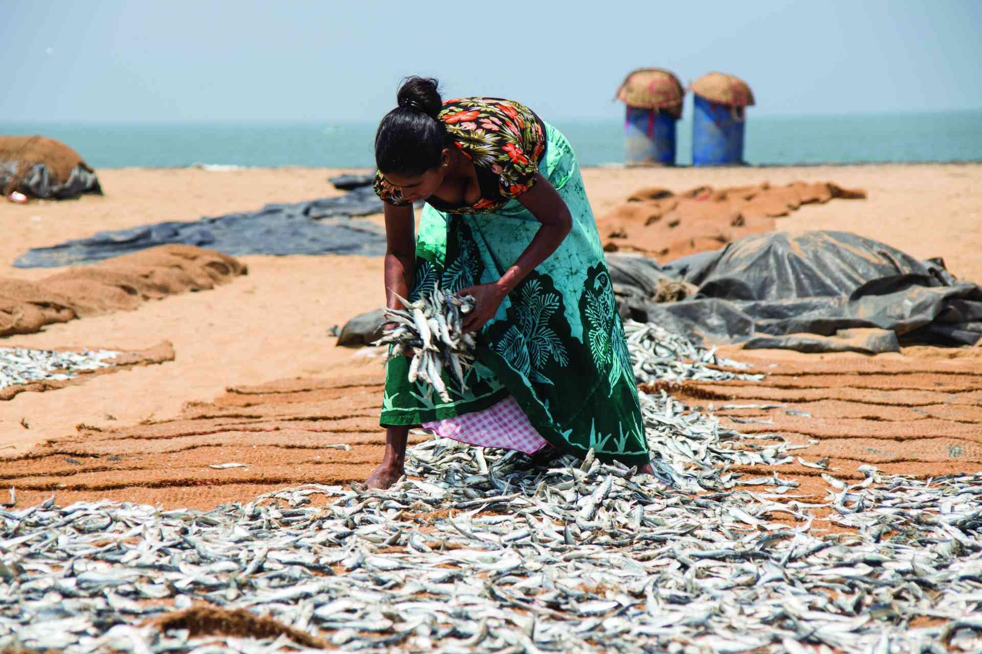 Negombo Fish Markets, Sri Lanka by David Hein