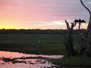 Ngurrungurrudjba (Yellow Water) at sunset, Northern Territory by Annelieke Huijgens