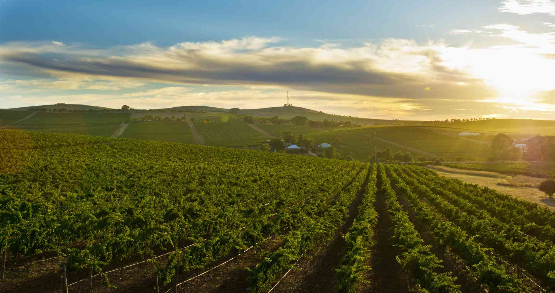 Clare Valley by Mike Annese, South Australian Tourism Commission