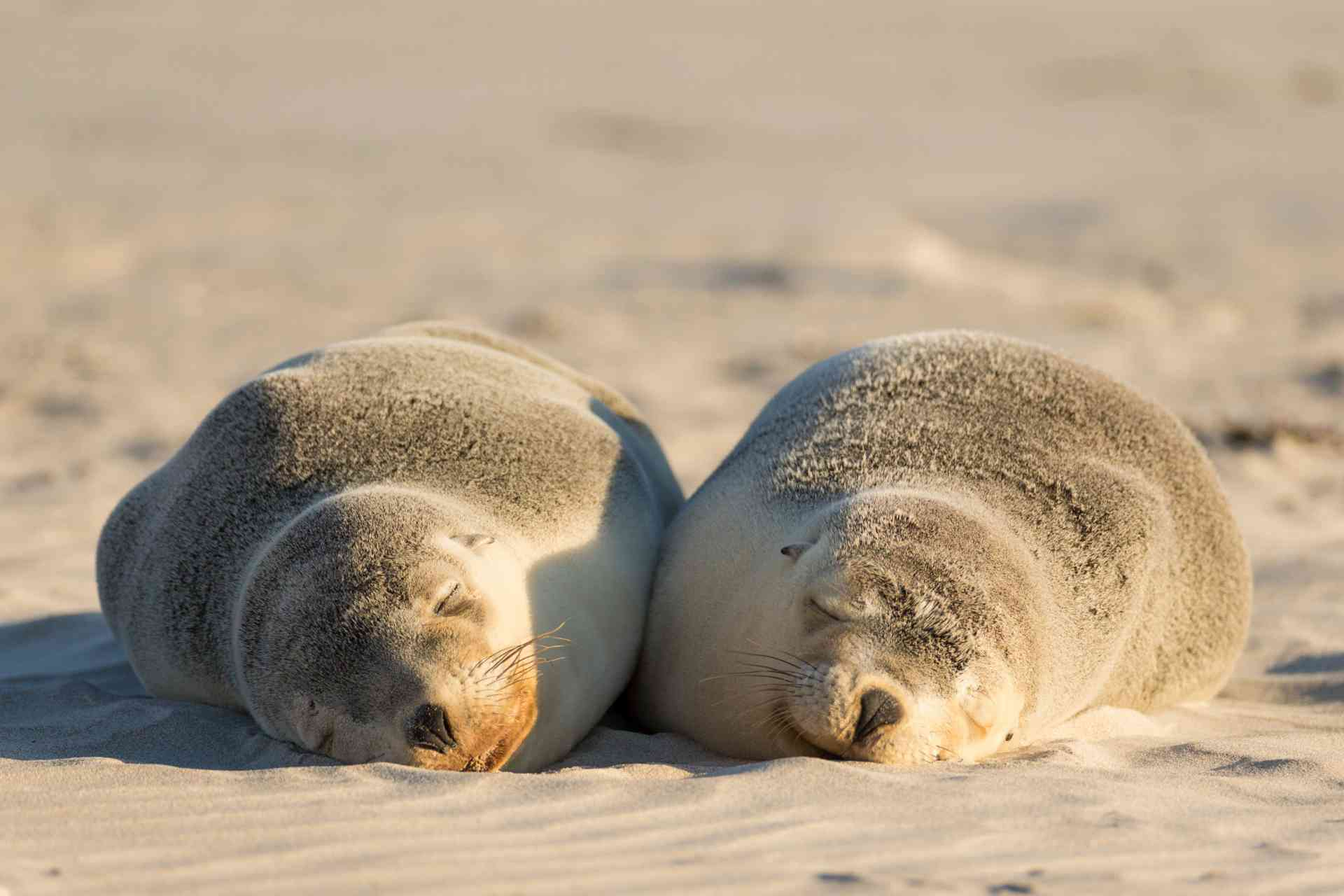 Seal Bay Conservation Park, Kangaroo Island by Chris Bay, South Australian Tourism Commission