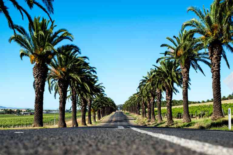 Seppeltsfield, Barossa by Gab Rivera, South Australian Tourism Commission