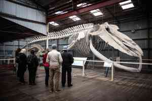Albany's Historic Whaling Station, Western Australia by Tourism Western Australia