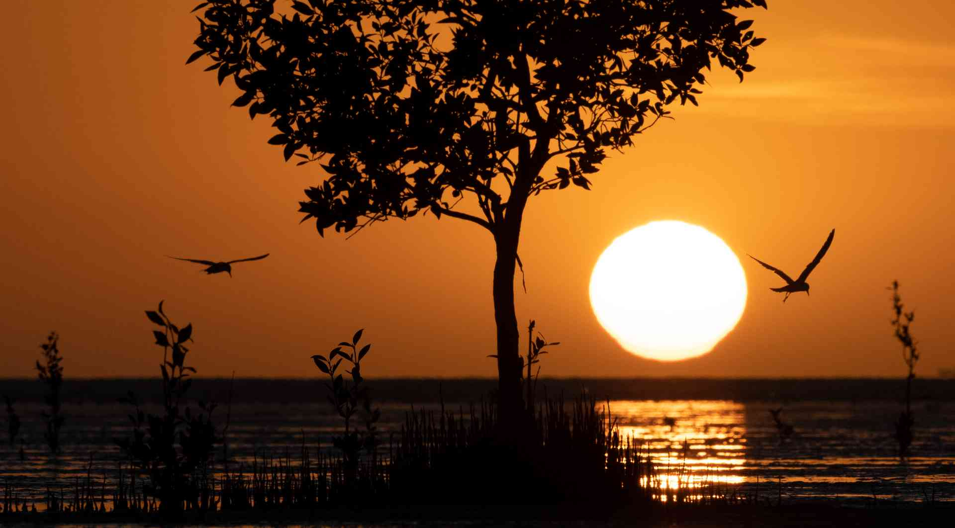 Sunset in the Kimberley, Western Australia by Scott Portelli (Aurora Expeditions)