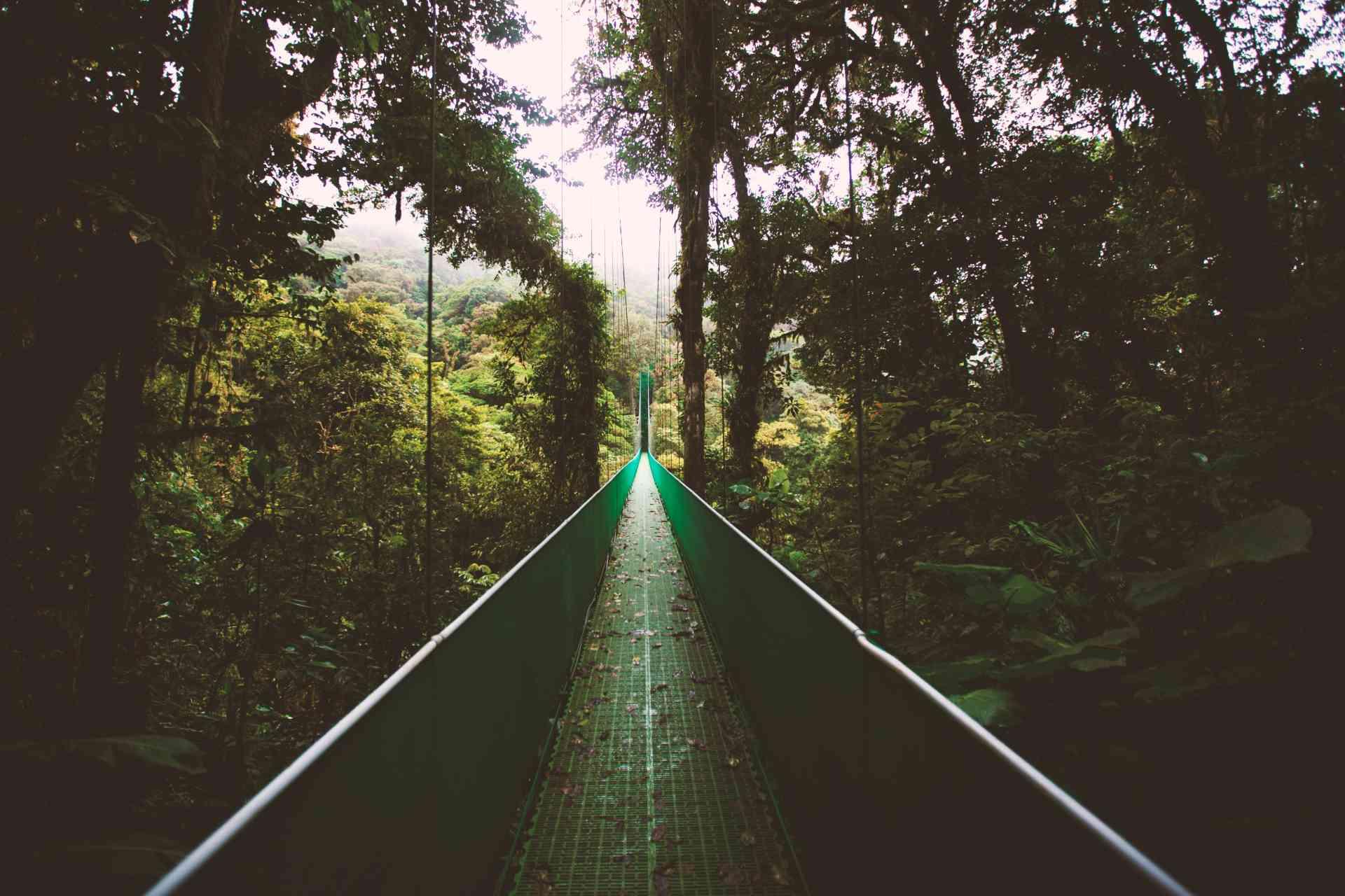 Selvatura cloud forest, Monteverde, Costa Rica by Ben Ostrower/Unsplash