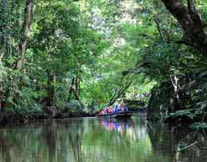 Tortuguero canals, Costa Rica by Emily Fraser