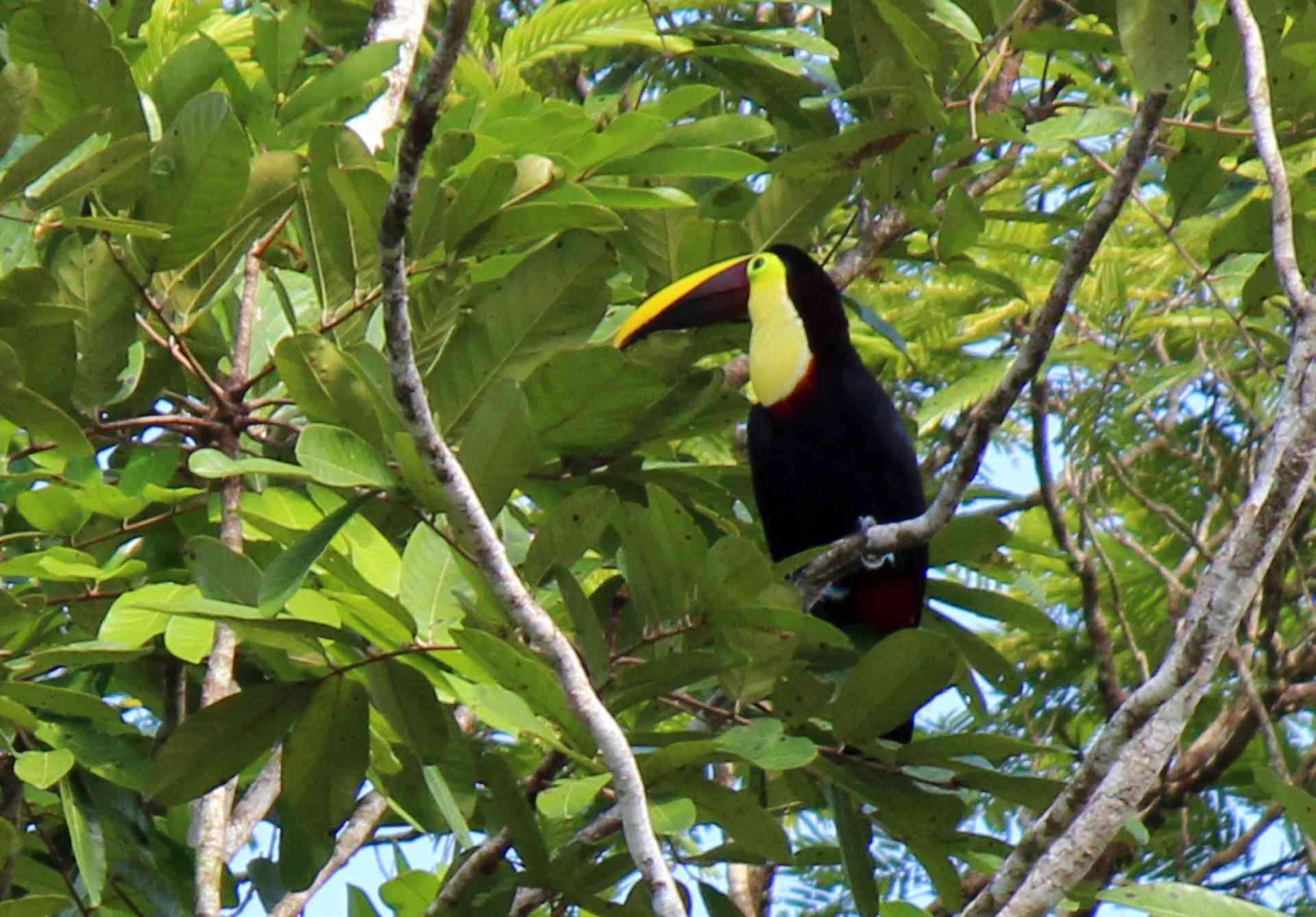 Wildlife of Costa Rica by Emily Fraser
