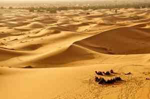 Sahara Desert, Morocco by Priscilla Aster