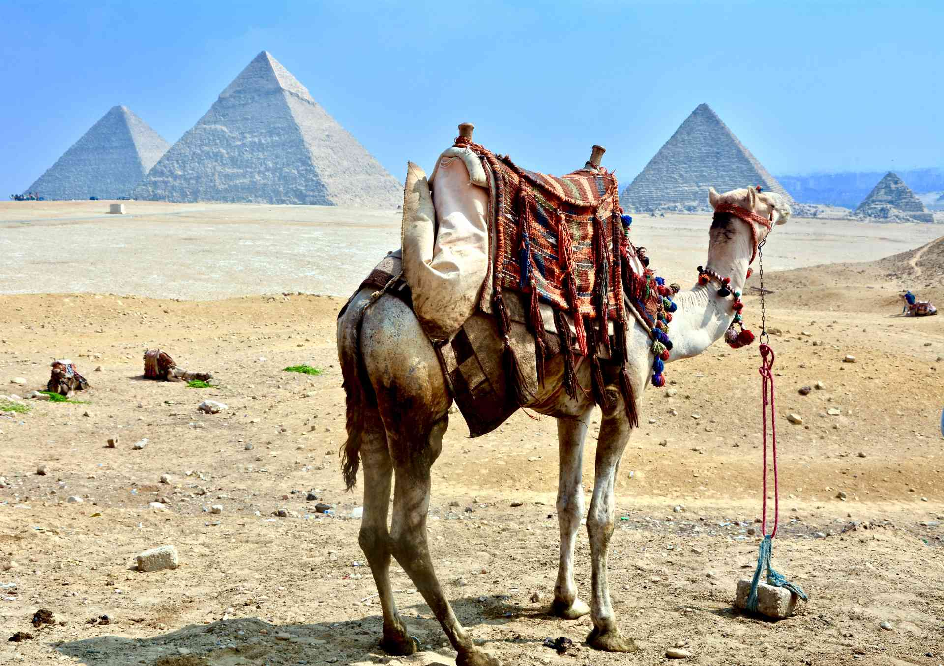 Camel in Giza, Egypt by Ian Carter