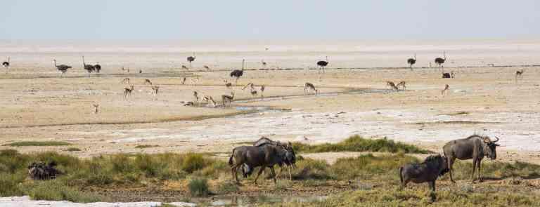 Etosha National Park, Namibia by Graham Meale