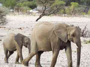 Elephants, Etosha National Park, Namibia by Emily Fraser