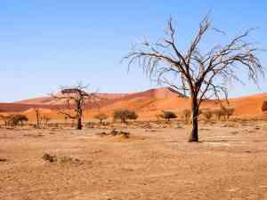 Dead Vlei, Namibia by Emily Fraser