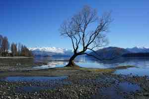 Wanaka, New Zealand by Priscilla Aster