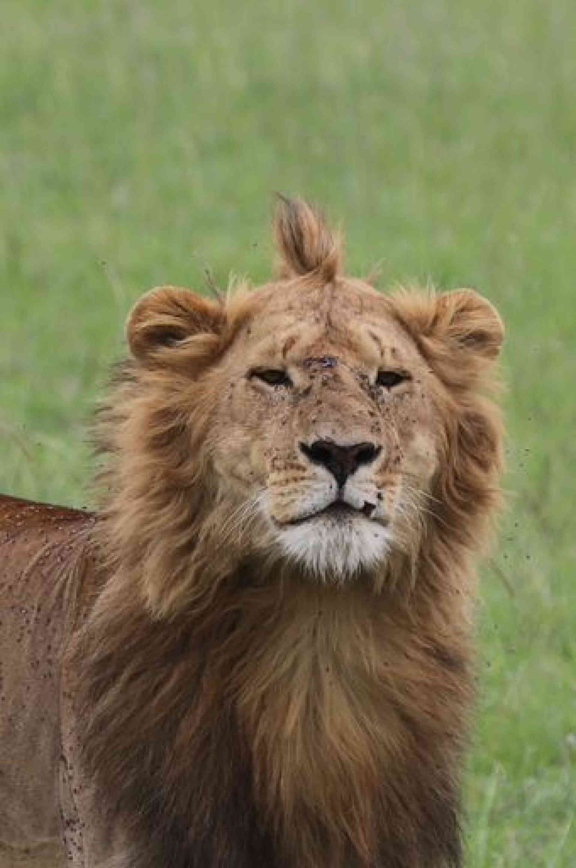 Congratulations to our August 2019 winner Christine for this great shot of the 'king of the jungle' on our South Africa, Botswana & Kenya small group tour.