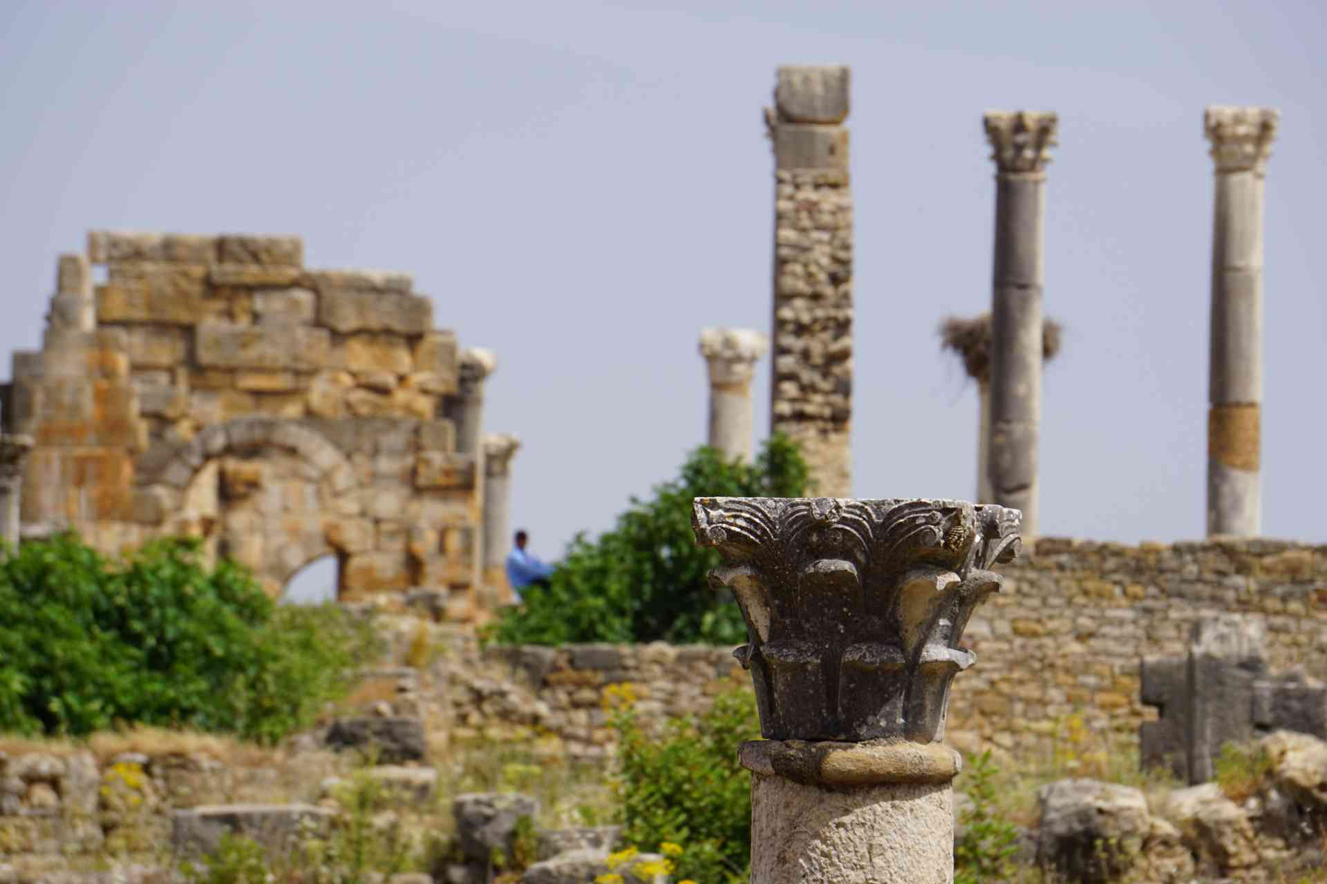 Volubilis, Morocco by Silvia Schweininger