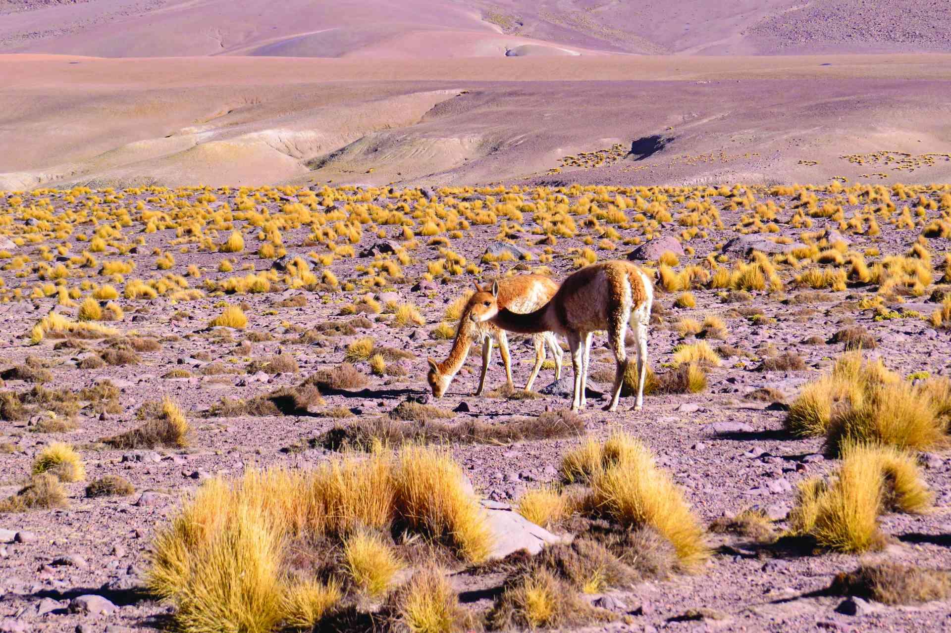San Pedro de Atacama, Chile by Marion Bunnik